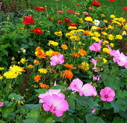 tips for flower garden