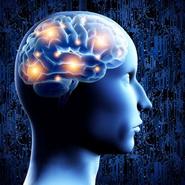 Millionaire's Brain course